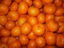 Fresh Honey Mandarin Orange Citrus Fruit