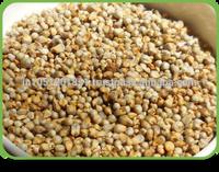 Gujarat Origin Best Quality Green Millet Price