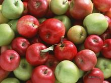 2015 new crop Fresh fuji apple,apple fruit,fresh apple