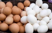 Avesdecorral huevos frescos, huevos de gallina, blanco y marrón huevos