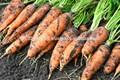 orgânica bioestimulante para melhor rendimento
