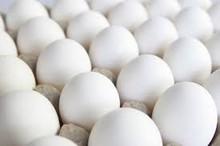 Blanco huevos( precio competitivo)