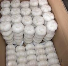 wholesale fresh white garlic natural garlic fresh garlic price with best price