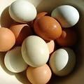الجملة الموردين من بيض الدجاج الطازج متاح في المخزون
