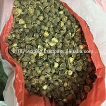 Hight Quality Moringa Oleifeira Seed