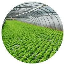 Greenhouse Film,