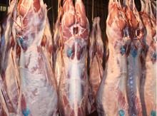 Halal Chilled Lamb