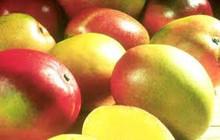 Fresh Guava, Fresh Mangoes, Fresh Fruits