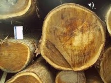 Acasia wood logs for sale 2015