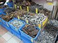 pescado blanco del pezón seca pepino de mar pepino de mar seco