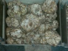 Moroccan Truffles