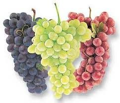 fresh grapes green red and black colour