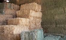 ANIMAL FEED ALFAFA HAY NEW AND OLD SEASON CROP