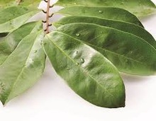 Soursop Leaves and fruits