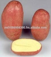 Fresh potato from Moldova