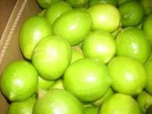 Fresh Lime/Lemon - citrus fruit