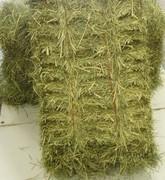 Cattle feed grass hay bale, animal fodder grass hay bale, grass hay bale