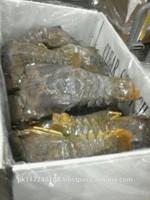 Frozen IQF Slipper Lobster