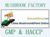 Mushroom extract capsuels;fungus extract capsules