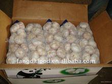 Cheap purple/white chinese garlics in China