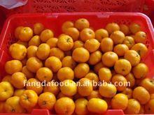 Chinese fresh baby mandarin orange