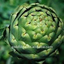 Cynara scolymus ,artichoke P.E. ,cynarin2.5% 5% by HPLC