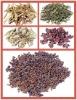 medicinal plants herbs