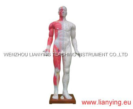 Hombre hombre medicina china modelo de la acupuntura