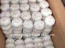 2011 pure white garlic(low price)