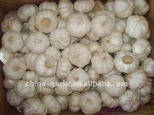 Pure White Garlic packing in 10kg/arton