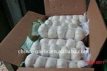 Braid Garlic for Sale -Export to Europe Market