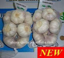 Chinese Fresh Garlic 500g/sack, Jinxiang New Crop