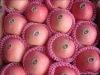 china fuji apple price 2011