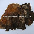 100% naturale chaga/obliquo inonotus estratto