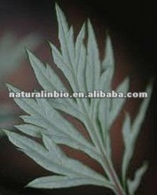 2012 newest Aiye Leaf Extract