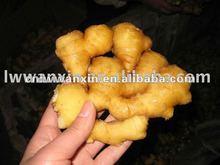 buy fragrant ginger