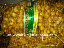 2011 new crop ginger price