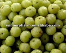 Emblic Leafflower Fruit P.E.
