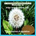 naturale estratto di tarassaco in polvere