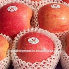 2011 Chinese New Crop Fresh Red Fuji Apple