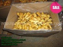 china farmland fresh young ginger