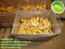 New Crop china ginger price 2012