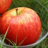 Delicious Apple Fuji Apple
