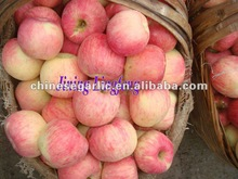 chinese fresh red fuji apple provider