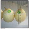 la nueva cosecha de pera del ya 2011