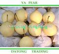 Prix du marché frais de variétés de fruits de poire de ya de nouveau modèle