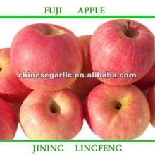 fuji apple /Chinese fuji apple /sweet red fuji apple