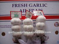 2011 crop fresh pure white garlic