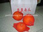 2012 Quality saffron fresh pumpkin