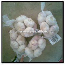 5 CM Purple Garlic
